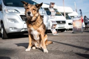 Dog Friendly Motorhomes for Hire in Bristol